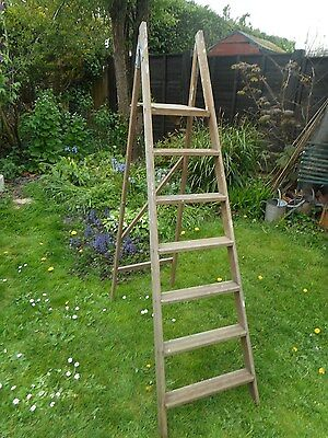 "Old pine step ladder, 6ft 4"" tall."