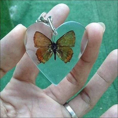 Butterfly Rare Heart Real Pendant In Clear Resin KeyChain Moth Key ring Insect