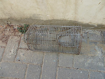 Collectible LARGE ANTIQUE WIRE MOUSE TRAP