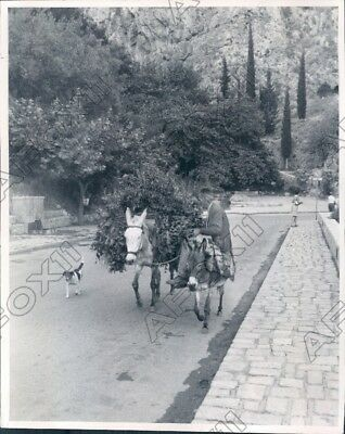 1970 Greek Island of Kos Mopeds Bicycles Donkeys are Transportation Press Photo