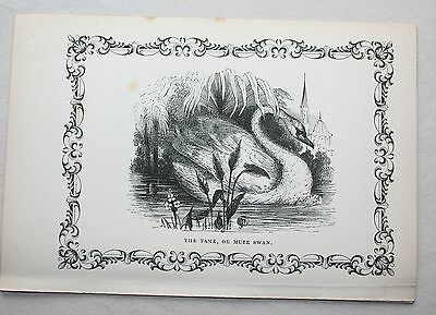 Antique Victorian Print Engraving Natural History 1840's  The Tame or Mute Swan