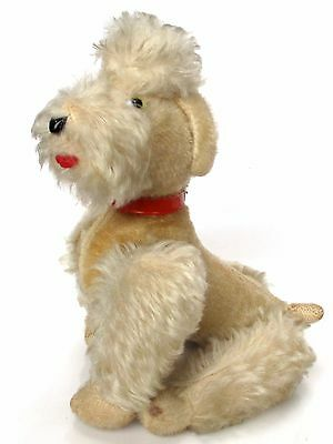 """antique Steiff Snobby Poodle Dog Mohair 8"""" Glass Eyes 50s Collar Straw Stuffed"""