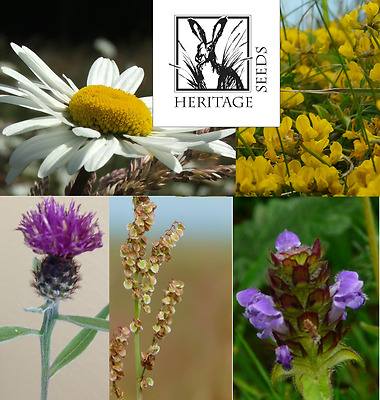 Wildflower plant collection- Native British  24 extra large plug plants