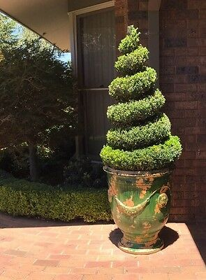 Stunning Spiral Buxus Topiary In French Anduze Pot.  BUY IT NOW