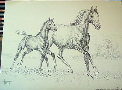 RUNNING MARE FOAL Charcoal Print Sam Savitt -Best Offer