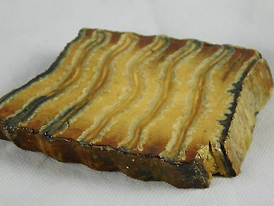 2) Woolly Mammoth TOOTH Slice Polished Fossil UK - Great Unique Gift
