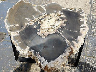 Very Large Petrified Fossil Wood Plate / Table Business Decor Gift Art 23.5""
