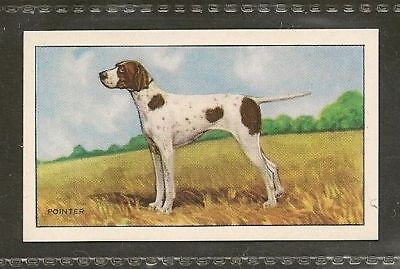 1936 UK Dog Art Full Body Gallaher Series A Cigarette Trade Card ENGLISH POINTER
