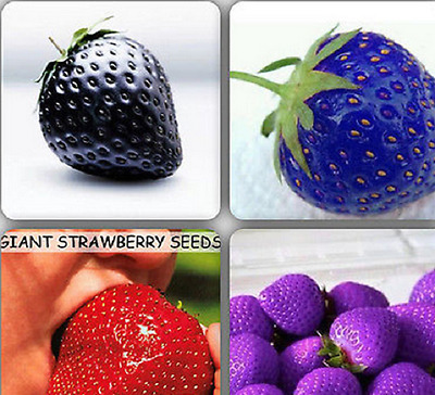 Mixed Strawberry Seeds Black Blue Giant Red Purple 100 Seeds rare fruits