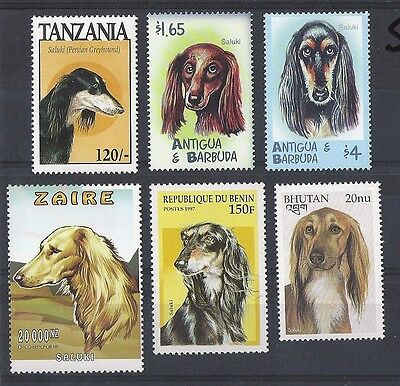Dog Art Postage Stamp Collection 5 SALUKI Head Studies 6 Different Worldwide MNH