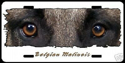 "Belgian Malinois on white ""The Eyes Have It "" Lic Plate"