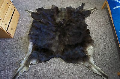 """Moose Hide 90"""" by 93"""" hair on, tanned leather"""