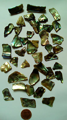 Paua Shell 40 Pieces Polished For Mosaic / Inlay / Crafts
