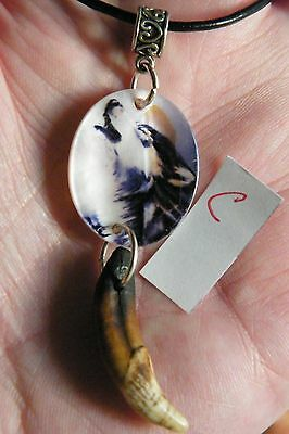 "GRAY WOLF NECKLACE Pictured on Sea Shell & Real Coyote Brown Teeth 18""-20"" NEW!"