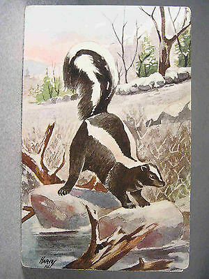 Skunk drawing postcard, Chas. K. Reed, Publisher & signed Harvey