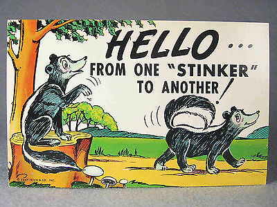 "Comic Skunk Postcard, ""Hello from one ""stinker"" to another""."