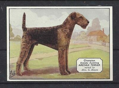 1938 UK Dog Art Photo Hand Colored Ardath Cigarette Card Named AIREDALE TERRIER