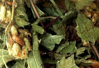 28gr/1 oz Wild Organic Calea Zacatechichi Dream Herb Leaf of God from Mexico
