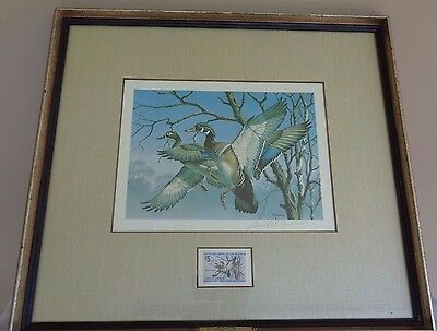 Framed Federal Duck Stamp Waterfowl Signed Print 1974 David A. Maass Wild Wings