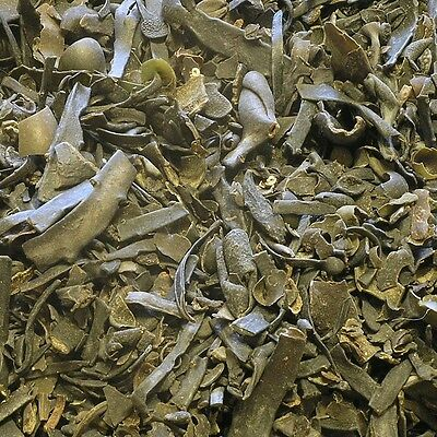 BLADDERWRACK PLANT Fucus vesiculosus DRIED Herb, Bulk Herbal Tea 50g