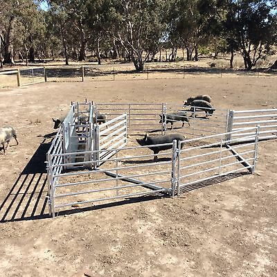 Sheep Or Goat Yard Panels,pigs And Alpacas
