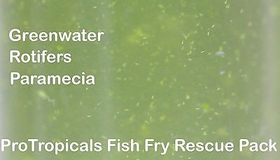 Fish Fry Rescue Live Food Pack / Greenwater, Rotifers, Paramecia, Microworm