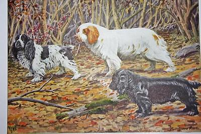 """1919 National Geographic Dog COCKER CLUMBER FIELD SPANIEL  7.75"""" X 5.5"""" PRINT"""
