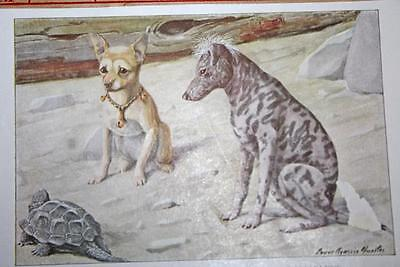 """VINTAGE 1919 National Geographic Dog CHIHUAHUA MEXICAN HAIRLESS 5.5"""" X 3.5 Print"""