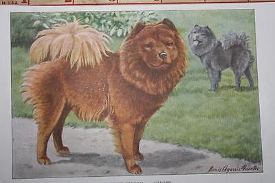 """VINTAGE 1919 National Geographic Dog CHOW CHOW 5.5"""" X 3.5"""" Fabulous Print"""