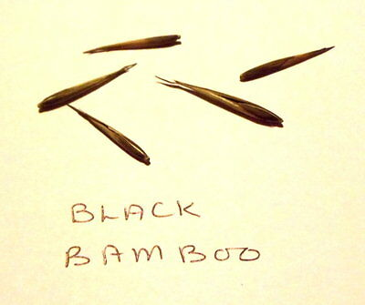 GIANT BLACK BAMBOO SEEDS.5 seeds.