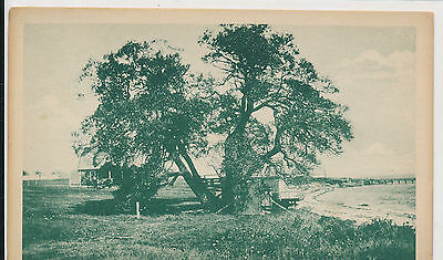The Old Willow, Chebeague Island, Maine   1917