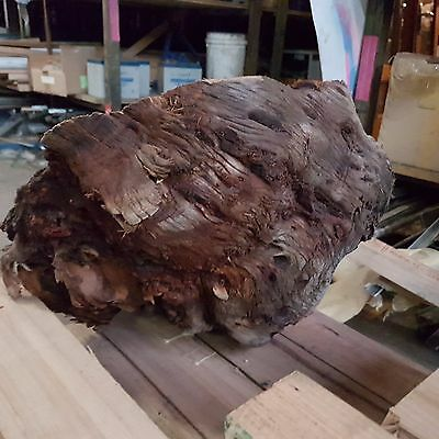 timber burl  approx 40cm wide