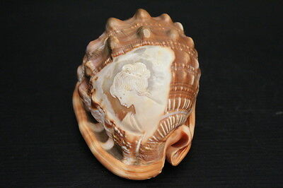 """Large Vintage Italian Ornately Hand Carved Cameo Conch Sea Shell ~ 5"""""""