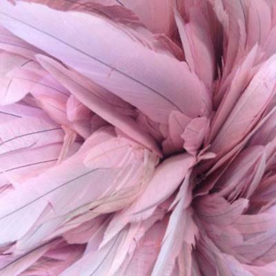 Variation Pink Stripped Coque Tails Pack of 10