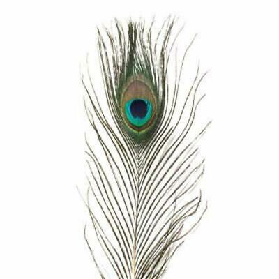 Mini Natural Peacock Eye ((SECONDS)) X 10