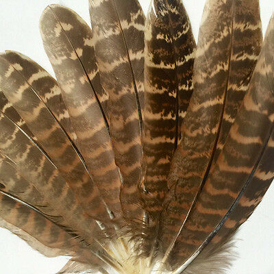 New Natural Turkey Wings x 10 - Wholesale Feathers & Craft Supplies