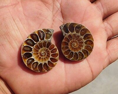 126.3 Cts Nicely 100% Natural Ammonite Mix Slice Loose Cabochon Loose Gemstone