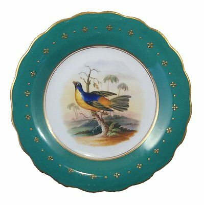 Beautiful Early 19Th Century Porcelain Handpainted Bird Plate