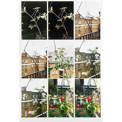 WOLFGANG TILLMANS limited edition SIGNED Process (Apple Tree) PHOTOGRAPH