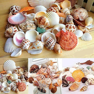 100G Mixed Sea Shells Shell Craft Seashells Home Aquarium Nautical Decor Top