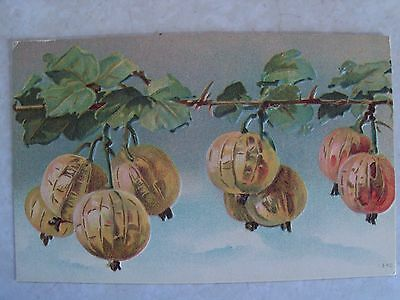Pumpkins on the Vine  Uncirculated, Embossed, Antique, Postcard PC. Post Card