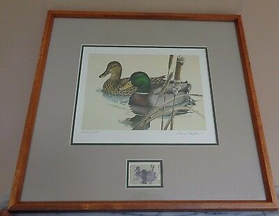 Framed First Texas Duck Stamp Print Mallards 1981 Larry Hayden 2352 / 16500