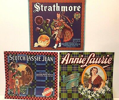 Vintage Set Of 3 Orange Crate Labels Strathmore Packing House-Tulare. CA