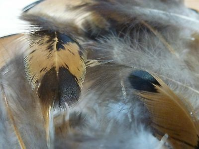 Feathers Tan And Black With Black Dots X20 6-11Cm (606)