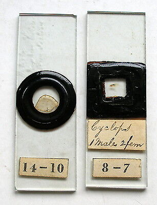 Pair  Very Early MICROSCOPE SLIDES,