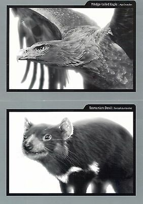 Set of 6 Postcards Australian Birds and Animals WildLens Press