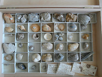 Antique Mollusc Fossil Collection, Great Britain, Ex. Bryce Wright