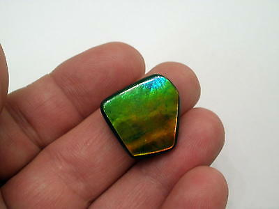 Ammolite Gemstone with Vibrant Green, Red and Hint of Blue Colors, Gorgeous Gem