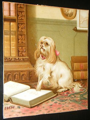 Vintage Groomed Lhasa Apso Dog w/ Books in a Library by EBSM Small Card 4x3 1/2