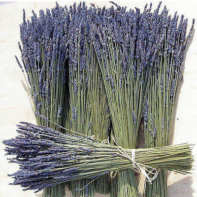 100 Bunch Natural Dried French Provence Fragrant Lavender Bouquet Handmade NEW